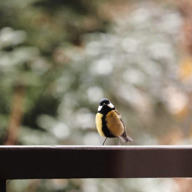 Sur la rambarde de notre balcon  Valloire il yhellip