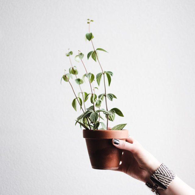 Une petite question pour les amoureux des plantes qui tranenthellip