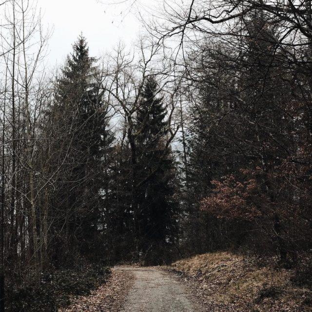 Jai commenc  couter La vie secrte des arbres dehellip