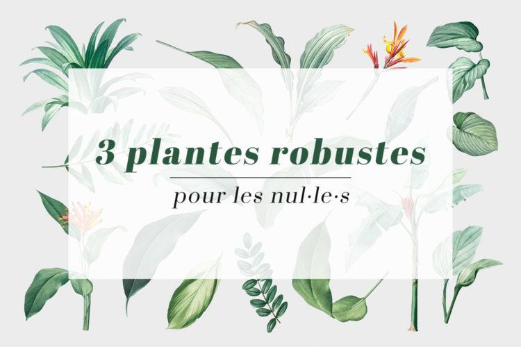 3 plantes robustes pour les nuls